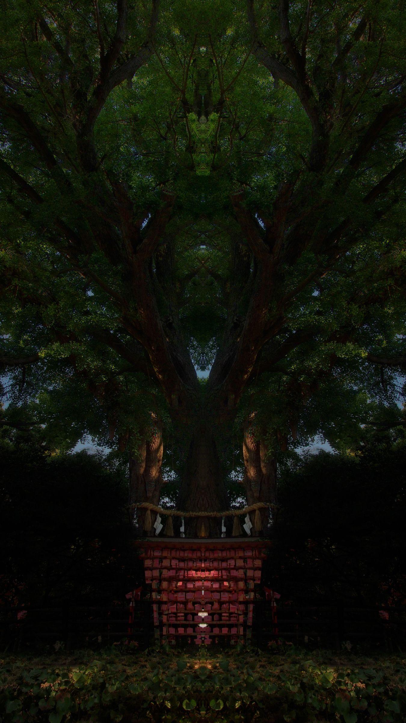 Slumber Tree